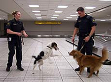 Officers from the Canada Border Services Agency now work with two new sniffer dogs, Rusty, left and Blizzard, right. (Erin Collins/CBC)