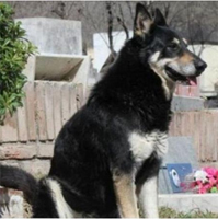 Capitan sits by his former owners graveside everyday.