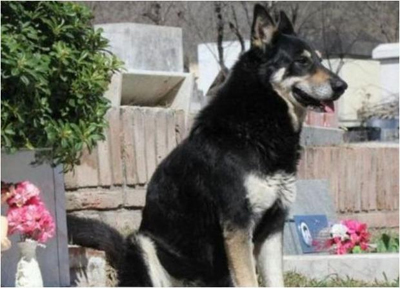 Capitan has sat at his former owner's grave side for the past 6 years, refusing to leave his side.