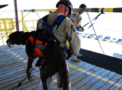 Chelsea and her handler must often rappel from helicopters to save lives.
