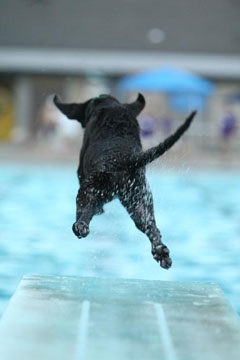 Jordan leaps from the dock during a recent Dockdogs event. Photo by Jeff Banaszek