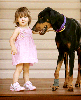 Doberman Saves Toddler