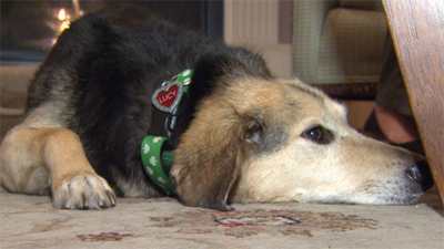 Lucy limped with severe injuries to find help for her owner after both were hit by a speeding car.