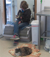 A student sits and reads in the cat area at the Biter Root Humane Association shelter in Hamilton, MT. Photo from Facebook