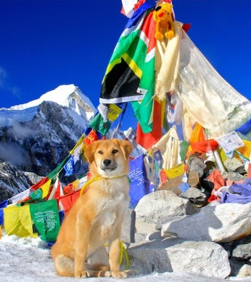 Rupee becomes the first recorded dog that made it to the base camp of Mount Everest.