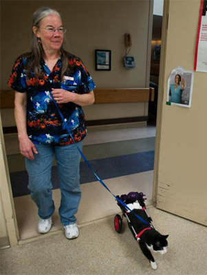 Dr. Betsy Kennon brings Scooter to visit patients. Photo by Stephanie Strasburg/Tribune-Review