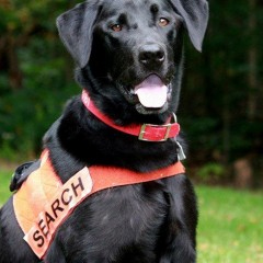 Soot used his scent of smell to locate a lost hunter in the mountains of West Virginia.