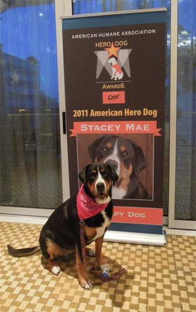 Stacey during the Hero Dog Awards. Photo courtesy of Maria Mandel.