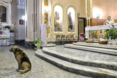 Loyal German Shepherd Tommy continues to visit church each day even after his owner dies.