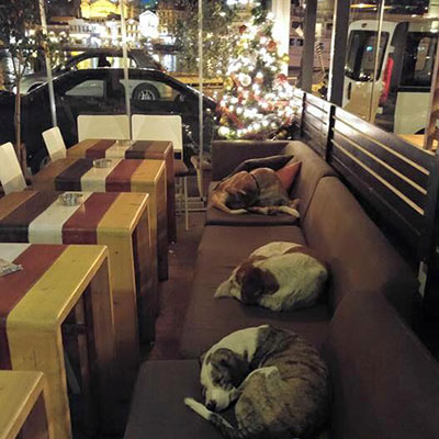 Dogs sleeping in a coffee shop in Greece