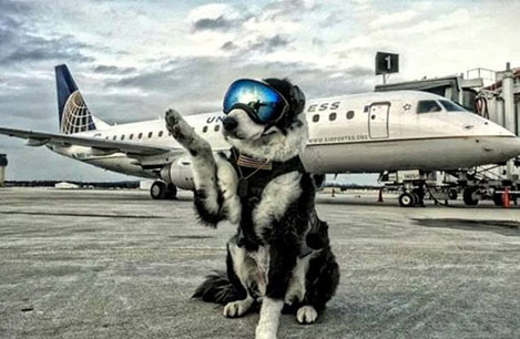 Piper the Airport K9