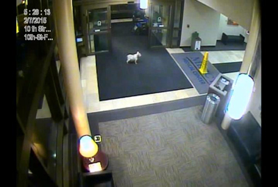 Sissy in the hospital lobby. (KWWL)