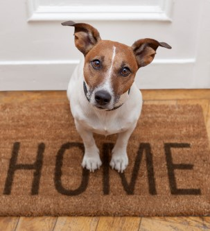4 Tips to Help Pet Separation Anxiety