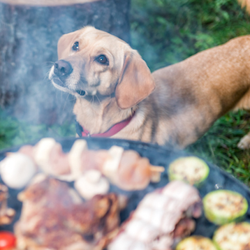 Backyard BBQ Safety for Pets