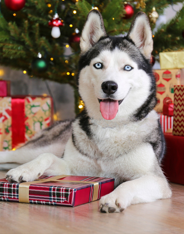 Your Pet's Best Christmas Ever