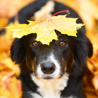 Make Fall Fun for Your Dog