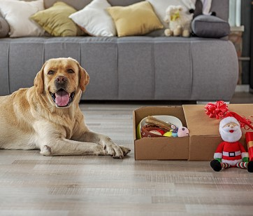 After-Christmas Pet Safety