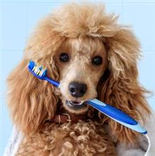 Tips for Pet Dental Month