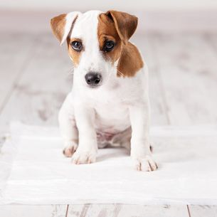 3 Steps To Housebreaking Your Puppy