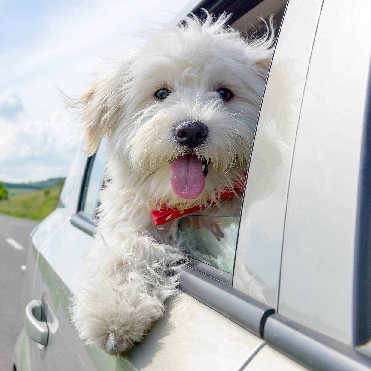 Tips for Holiday Trips with Man's Best Friend