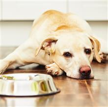 Does Your Pet Have a Food Allergy?