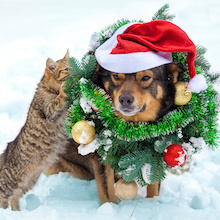 4 Tips To Keep Your Pets Safe During the Holidays