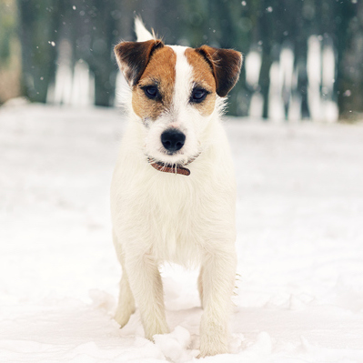 Winter Care Tips for Your Pets