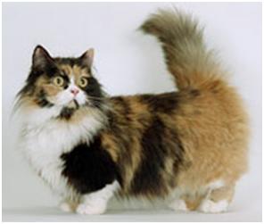 Munchkin Longhair Care A Lot Pet Supply