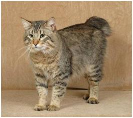 african civet cat