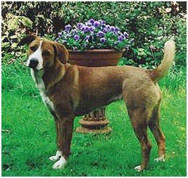 Best Large Breeddog Food
