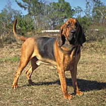 Bloodhound Care A Lot Pet Supply