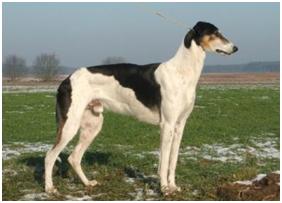 Chinchilla For Sale >> Chart Polski - Care-A-Lot Pet Supply