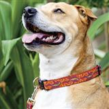 Lupine Patterned Collars, Harnesses and Leashes 1 inch 2618b