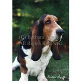 Outdoor Breed Flags with Images by Photographer Barbara Augello 5775E