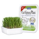 Gimborn® Cat Grass Plus® 72461B
