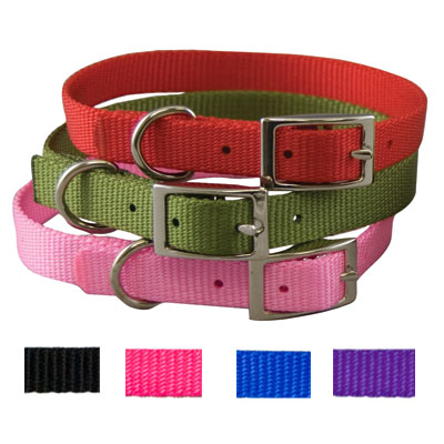 "3/8"" x 10"" Traditional Style Buckle Collar P2999010e"
