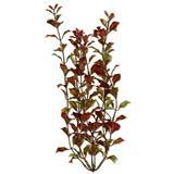 Tetra ® WaterWonders ™ Red Ludwigia Aquarium Plant 6 in. Z04679819113