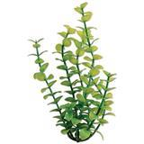 Tetra ® WaterWonders ™ Green Bacopa Aquarium Plants Z04679819121b