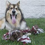 Mammoth® Flossy® Chews 2 Knot Rope Dog Toy I000906b
