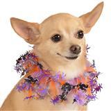 Rubie's® Pet Shop™ Boutique Fancy Spider Halloween Dog Collar I009392b