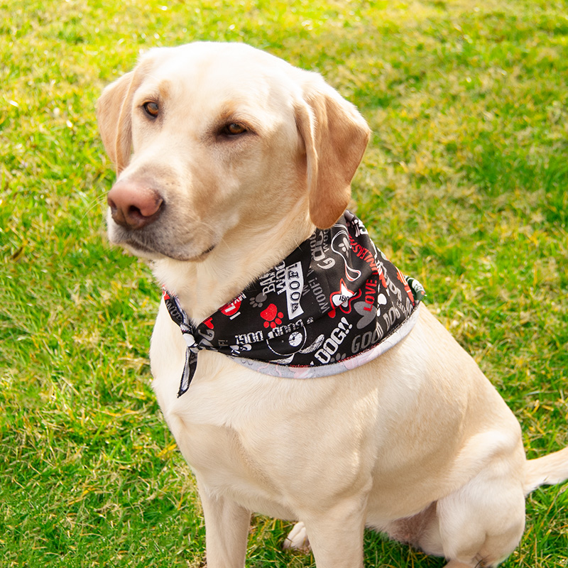 DoggieDannas® Bark Woof Woof Pet Triangle Dog Bandanna 226648