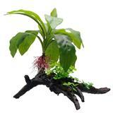 "Fluval Striped Anubias Plant 13.5"" I003742"
