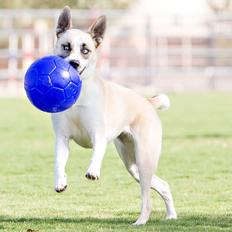 Jolly Pets®Jolly Soccer Ball I011483b