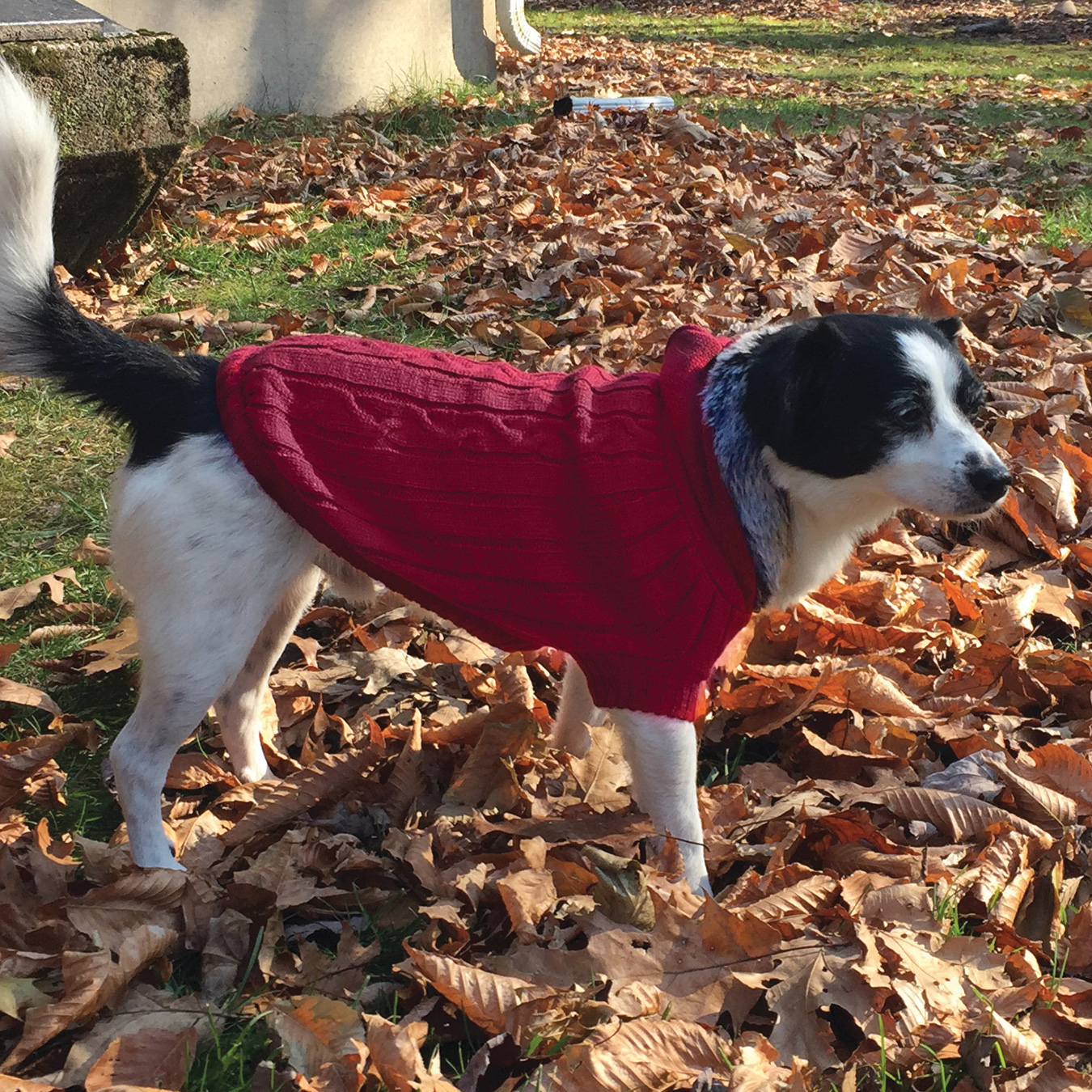 Ethical Products Fashion Pet™ Faux Fur Trim Hooded Sweaters I014140