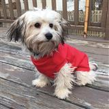 Ethical Pets Classic Sporty Crewneck Sweaters For Active Canines. I014162