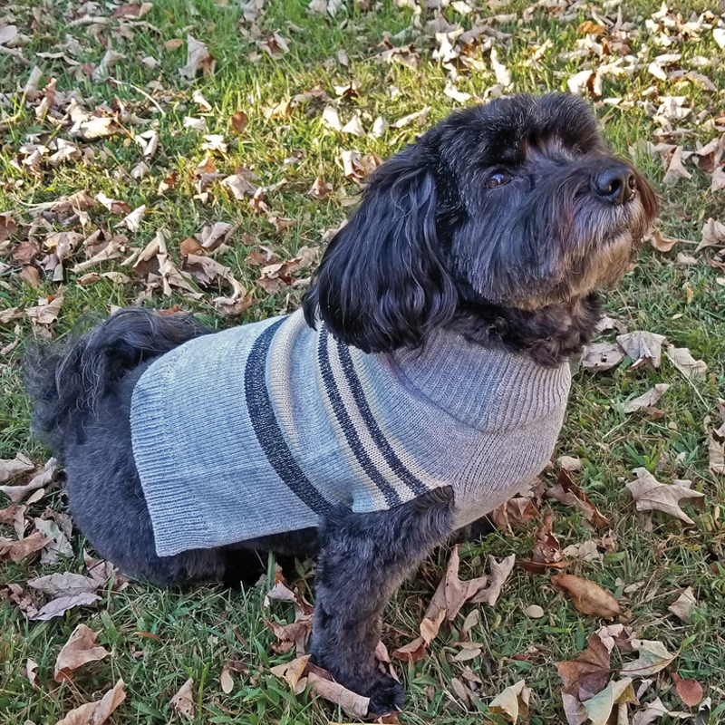 Ethical Products Fashion Pet Shimmer Stripes Sweater Gray  I016817