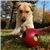 MiniTeaser Jolly Pets Jolly Ball Assorted Colors, 4.5 in.